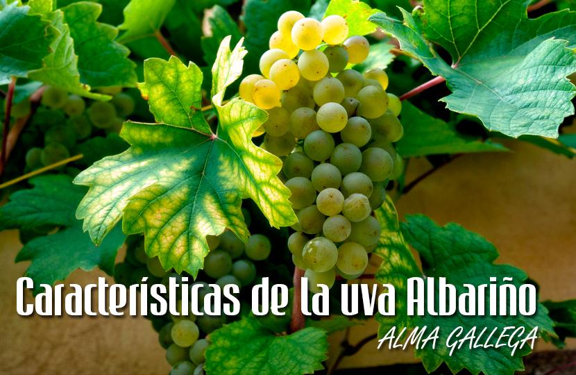 Resultado de imagen de albariño uva