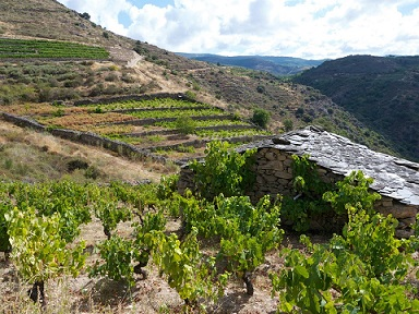 Vinos Valdeorras