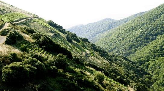 Bodegas Descendientes J. Palacios