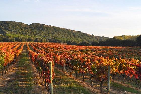 Vinos Navarra