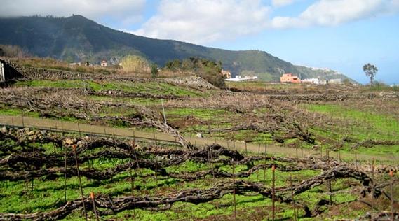 Vinos Valle de la Orotava