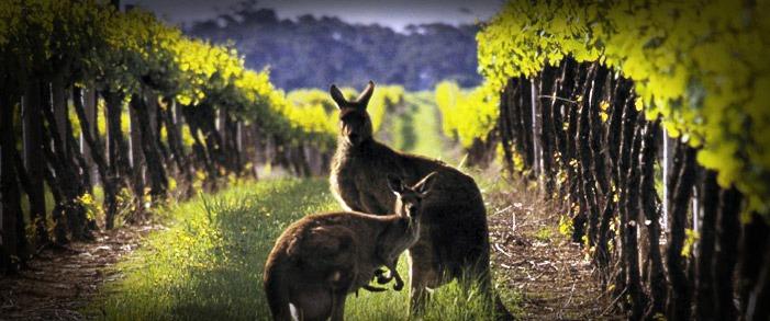 Comprar vinos de Australia