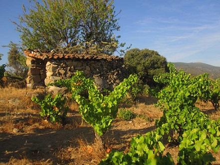 Comprar vino Bodegas Canopy