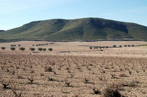 Comprar vino Bodegas El Nido