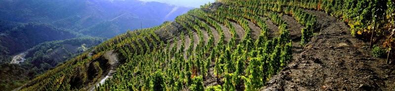 Vinos Priorato