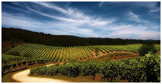 Comprar vino Bodegas Terras Gaudas