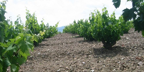 Vinos Calatayud