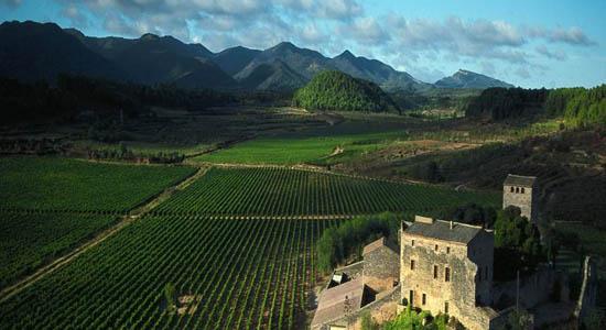 Comprar vino Bodegas Torres