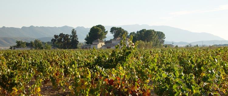 Comprar vinos de Italia