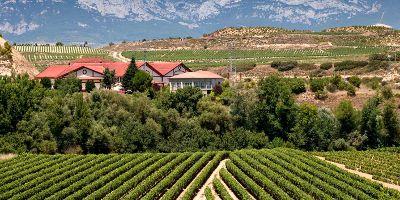 Comprar vino Bodegas Viña Salceda